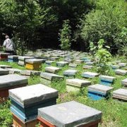 تولید عسل ایران