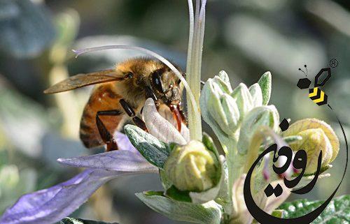 معنی عسل
