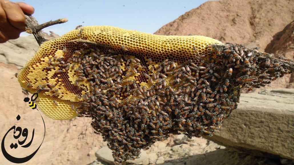 عسل زنبور وحشی