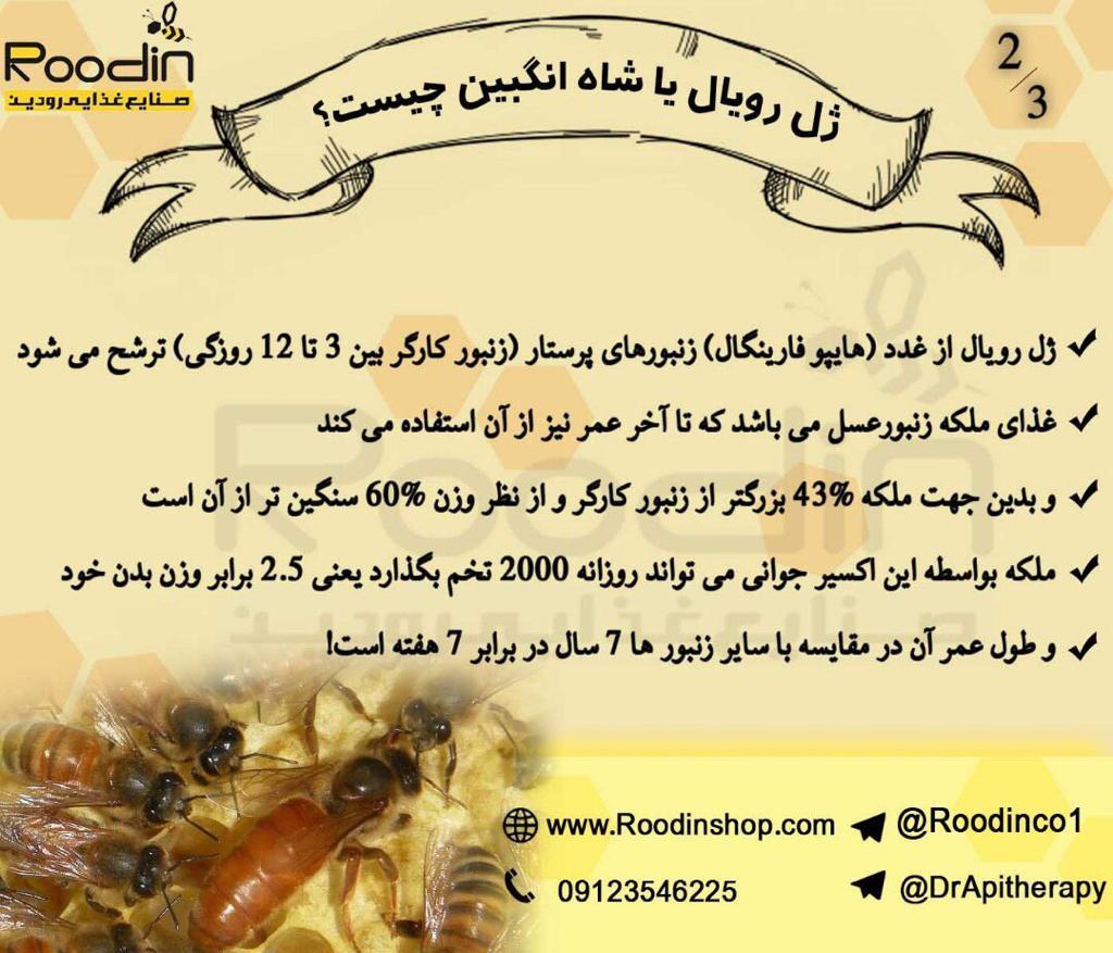 ژل رویال عسل چیست
