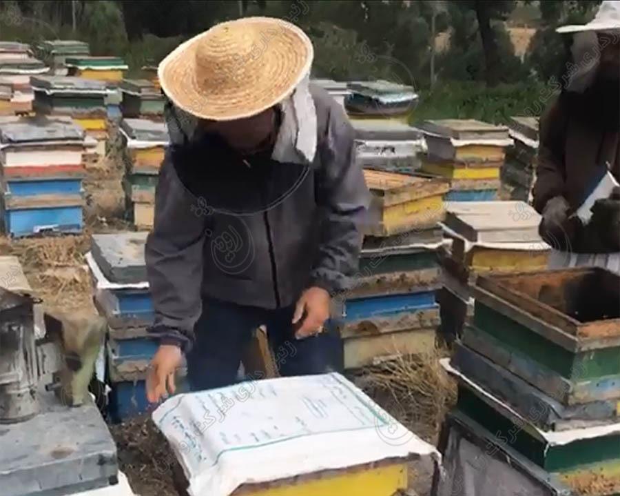 کلاه توری زنبورداری
