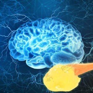 ژل رویال درمان بیماری های مغز و اعصاب