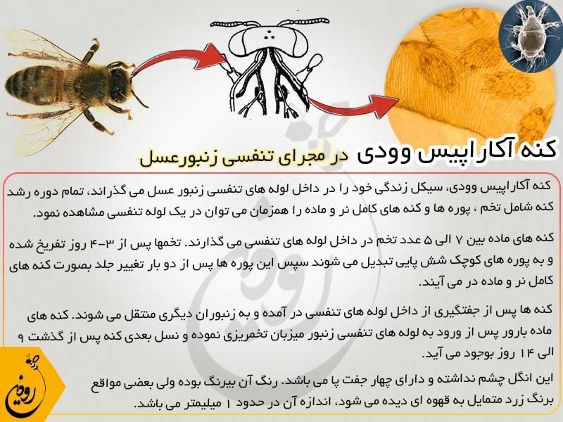 داروی منتول و کنه آکاراپیس وودی زنبورعسل